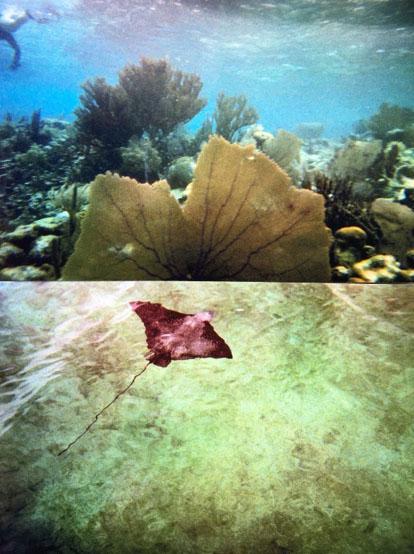 coral_reef.jpg